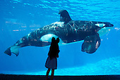SeaWorld Ends Killer Whale Breeding Program