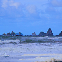 Quinault Rain Forest, Olympic National Park, Rialto Beach, Mora National Park, WA Color Giclee' Print