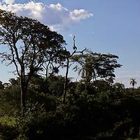South America, Argentina, Iguacu Falls. Flora of Iguacu.