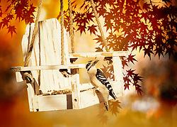 A small downy woodpecker visits my feeder under warm autumn foliage