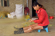 Mending fishing nets in the harbour where the Maritime Silk Road started, during many centuries, near Xu Wen, Guangdong province, China
