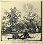 Men and Camels rest under an Acacia Tree in Wady Feiran, Sinai Wood engraving of from 'Picturesque Palestine, Sinai and Egypt' by Wilson, Charles William, Sir, 1836-1905; Lane-Poole, Stanley, 1854-1931 Volume 4. Published in 1884 by J. S. Virtue and Co, London