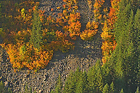 Stevens Canyon Mt Rainier autumn