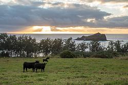 Morning View Of Oprah Winphreys Land & Ocean From Hana