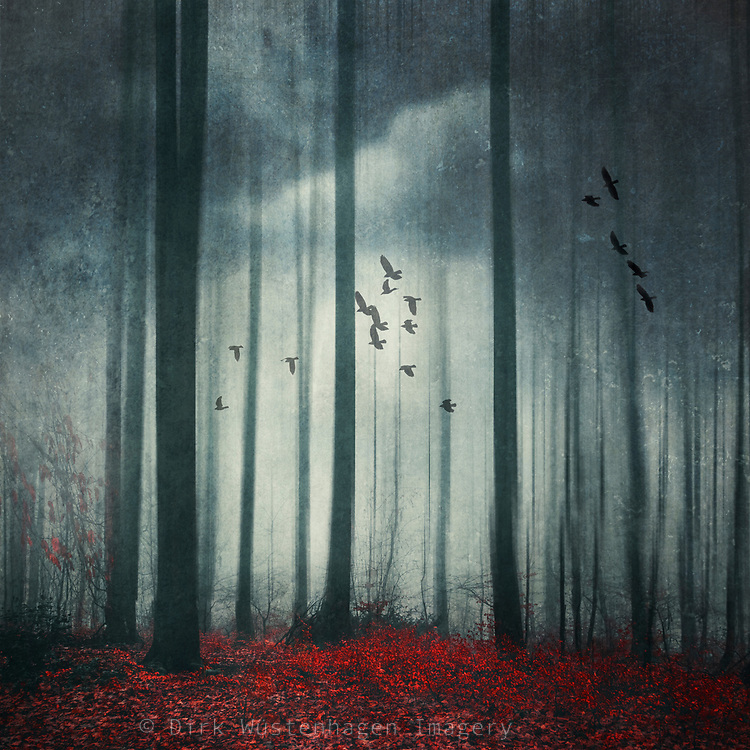 Abstract misty forest with a flock of birds - manipulated photograph