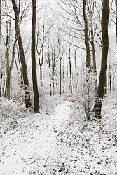 Path through woodland near Birdlip on frosty and snowy winter day