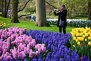 Woman taking photographs  at the Keukenhof tulip and flower show in Lisse, Holland - Netherlands Editorial Use only.