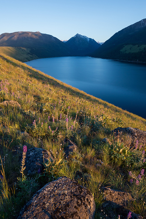 Wildflowers on the Wallowa Lake moraine with the Wallowa Mountains in the background, Oregon.