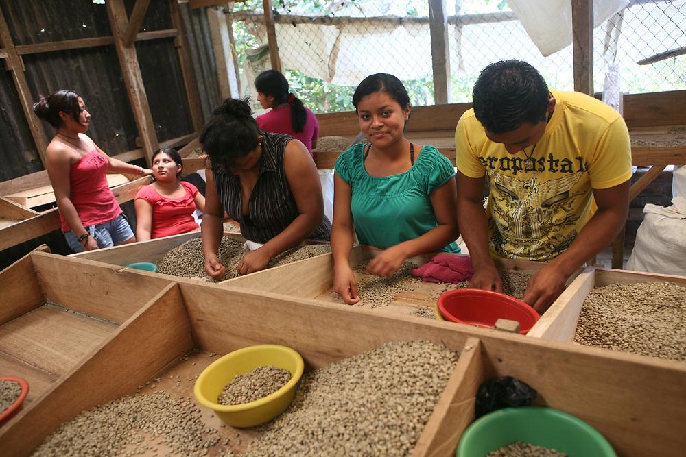 Workers sort coffee at Coop El Salto, a member of APECAFE. APECAFE is a certified Fairtrade second-level cooperative based in El Salvador.