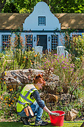 Final preparations on the Trailfinders: A South African Wine Estate, Sponsor: Trailfinders Ltd, <br /> Designer: Jonathan Snow and Contractor: Stewart Landscape Construction - The RHS Chelsea Flower Show at the Royal Hospital, Chelsea.