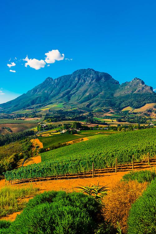 Vineyards atop Helshoogte Pass, near Stellenbosch, Cape Winelands (near Cape Town), South Africa.