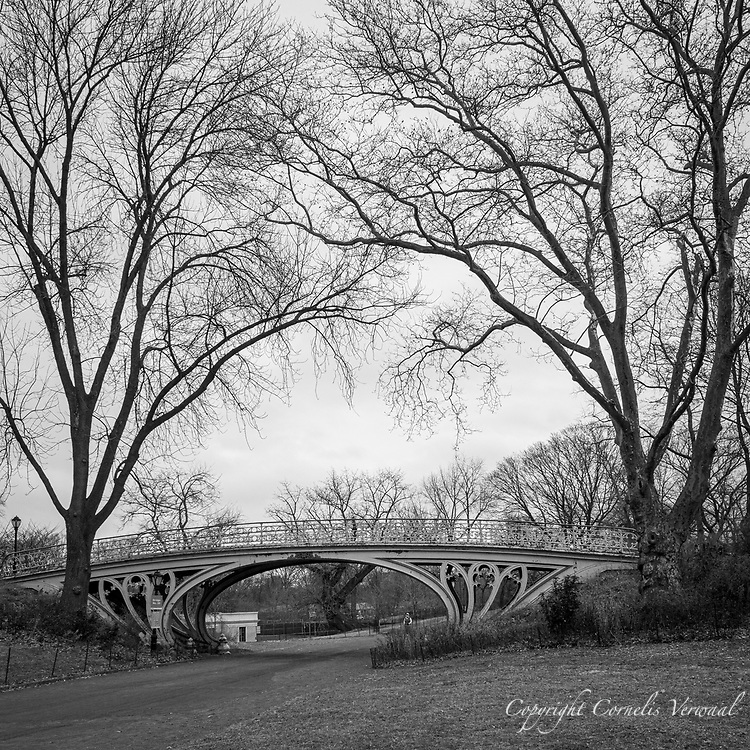 Tall trees and Gothic Bridge over the Bridle Path in Central Park.
