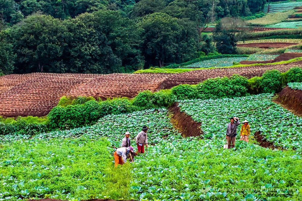 Java, East Java, Batu. Agriculture and farmers west of Batu.