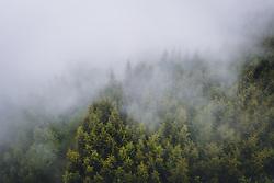THEMENBILD - Nadelbäume eines Waldes im Nebel, aufgenommen am 10. Juni 2020 in Kaprun, Österreich // Trees of a forest in fog, Kaprun, Austria on 2020/06/10. EXPA Pictures © 2020, PhotoCredit: EXPA/ JFK