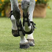 20210528 30 Equitazione : Piazza di Siena 2021