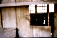 An empty, dimly lit horse's stall, as seen through the horse's small peephole window.