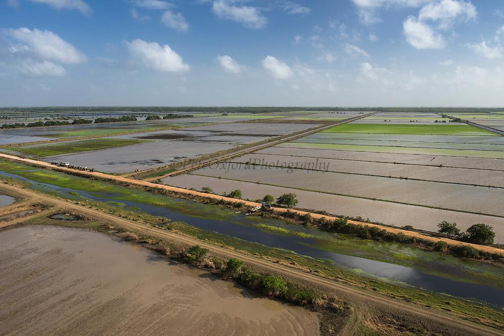 Rice production<br /> Coastal area<br /> Miconi Mahaica<br /> GUYANA<br /> South America