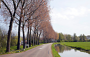 Tree lined road and canal springtime, Maasluis, Netherlands