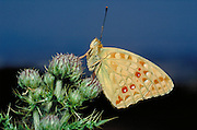 Montesinho Natural Park butterfly diversity is one of the highest in Portugal