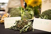 BROCCOLI<br /> Curator: Jim Myers, Oregon State University Chef: Robynne Maii, Fete<br /> Farmer: John Augustine, Augustine Family Farm