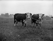11/08/1959<br />