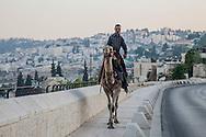 Gerusalemme,Il cammelliere.   Jerusalem, The camel driver.