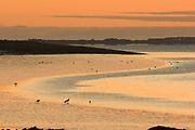 Gulls at sunrise, Moray Firth, Inverness-shire, Highland, Scotland