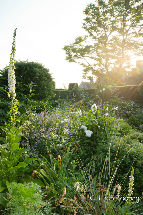 Early sun in the blue and white garden at Cothay Manor, Greenham, Wellington, Somerset, UK