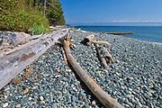 Driftwood on Sandcut Beach. <br />Jordan River Regional Park<br />British Columbia<br />Canada