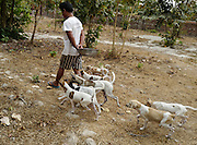 Feeding time at the Yangon Animal Shelter as some puppies eagerly follow one of their caretakers with the food.