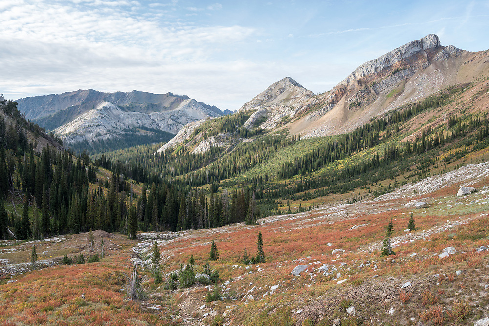 Alpine Fleeceflower turning color in a basin in Oregon's Wallowa Mountains.