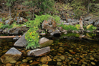 Merced River Meditation, Yosemite Valley. Image taken with a Nikon D3 camera and 24-70 mm f/2.8 lens.