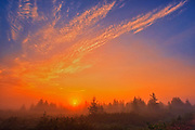 Fog at sunrise over the boreal forest<br />Havre-Saint-Pierre<br />Quebec<br />Canada