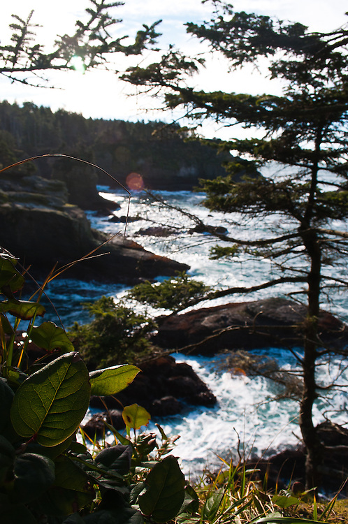 A view through Salal and Sitka Spruce at Cape Flattery on the Olympic Peninsula.  This is the most Northwesterly point in the Lower 48.