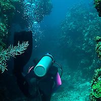 Lonestar Ledges, Grand Cayman
