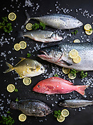 A variety of fresh fish on ice including Bonito, Branzino, Salmon, Golden Pompano, Red Snapper, Rainbow Trout, and Tilapia all from Express Foods located in Springfield, MO. Photo by Brandon Alms Photography