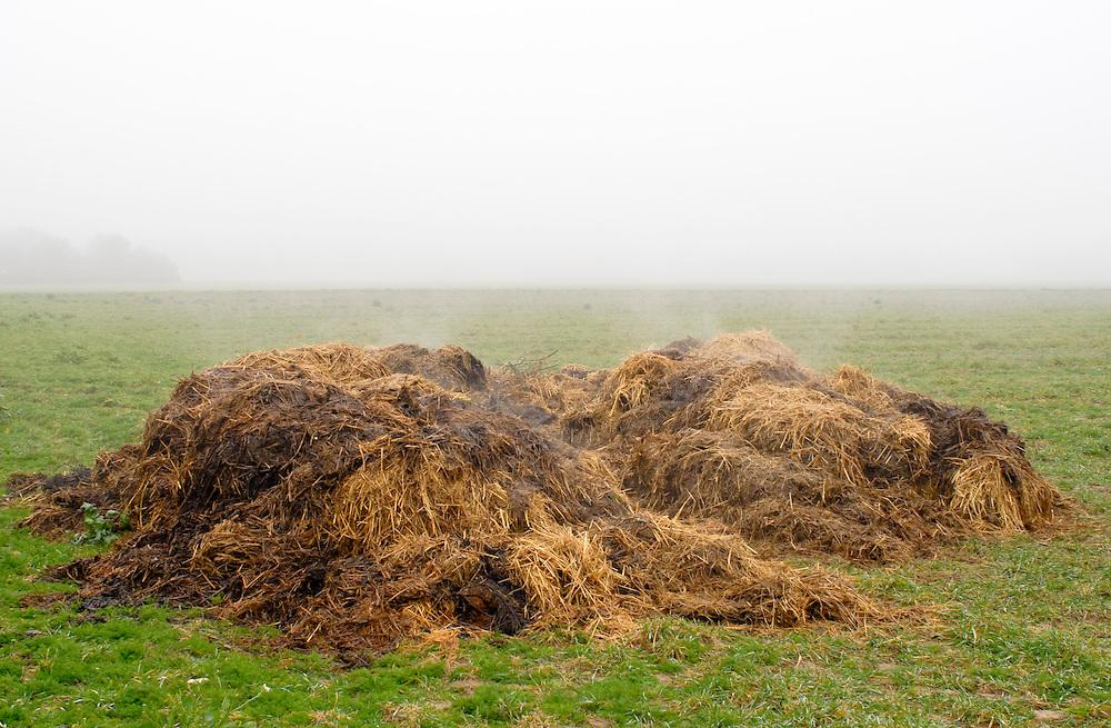 Ein dampfender Misthaufen auf einer Wiese |A steaming dunghill - dung pile - on a meadow