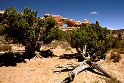 UT: Utah; Arches National Park, South Window Arch      .Photo Copyright: Lee Foster, lee@fostertravel.com, www.fostertravel.com, (510) 549-2202.Image: utarch206