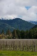 Foris Winery & Vineyards