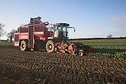 Holmer Terra Dos 3 sugar beet harvester Rendlesham, Suffolk, England