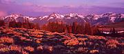 Jarbidge Range and Sagebrush at Dawn, Jarbidge Wilderness, Humboldt-Toiyabe National Forest, Nevada