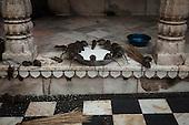 The Rat Temple, Karni Mata