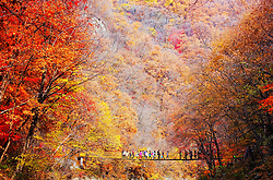 Oct. 10, 2017 - Fushun, Liaoning Province, China - Tourists enjoy the view of fall colors and turning leaves, as they walk across a swing bridge at a scenic area in Fushun, northeast China's Liaoning Province. (Credit Image: © Li Hongxin/Xinhua via ZUMA Wire)