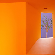 A small colorful square window with a green tree growing on the other side. Mexico