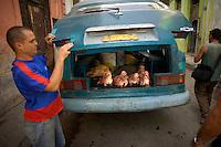 cubans closing van full of pig heads