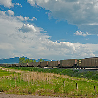 A coal train from eastern Montana mines rumbles through Bozeman.  With rising coal exports to China, as many as 40 of these may soon pass through the town, gridlocking traffic.