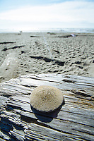 Kalaloch Beach  in Olympic National Park, WA