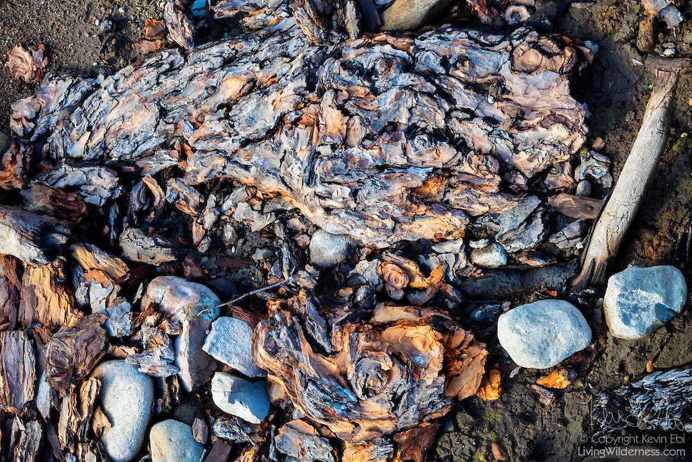 A prolonged drought lowered the water level of Rattlesnake Lake near North Bend, Washington, exposing tree bark that had been submerged for 100 years.