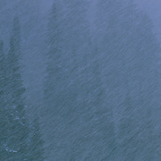 Fir trees are abstracted in layers during a snowstorm in East Vail, Colorado.