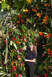 © Licensed to London News Pictures. 02/02/2012. London, England.  Royal Botanic Gardens at Kew celebrate the Tropical Extravaganza Festival 2012 with more than 6,500 tropical plants. The festival runs from 4 February to 4 March 2012. In this picture: Jacks Barclay, Kew Trainee.  Photo credit: Bettina Strenske/LNP